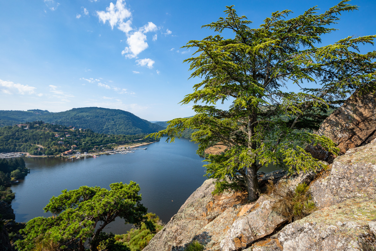 Découvrez l'application mobile Loire en Vert